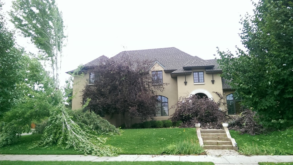 Either that tree really wants in the house or there was a meteorological event.