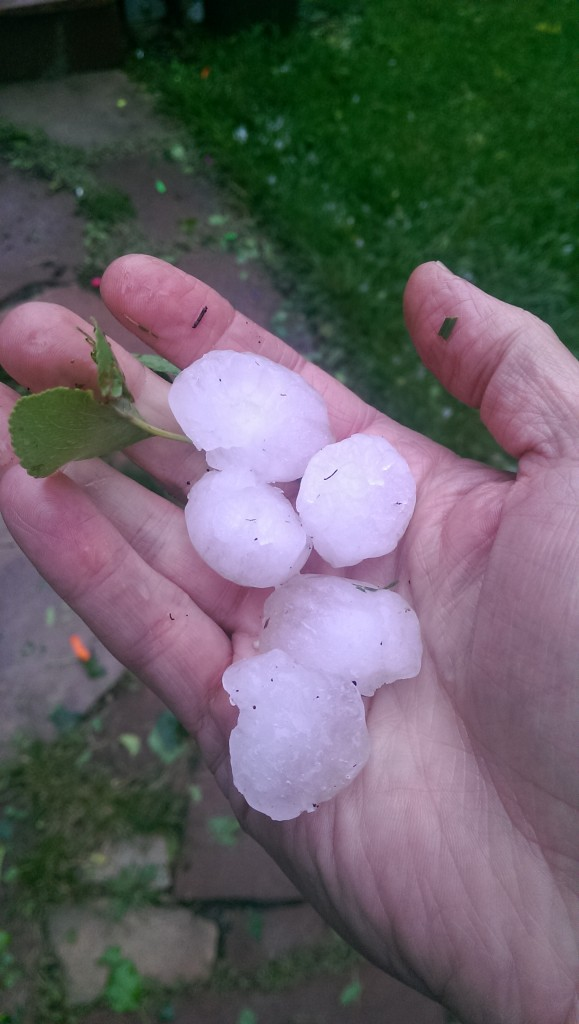 A few hailstones (45 minutes after they fell, so diminished)